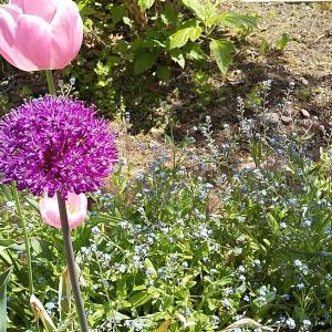 春の花壇続きその2 【ずっと春が続く庭ハッピーガーデン】