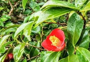 雨の中に咲く花々