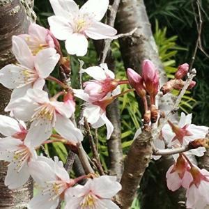 春〜ぅ\(^o^)/