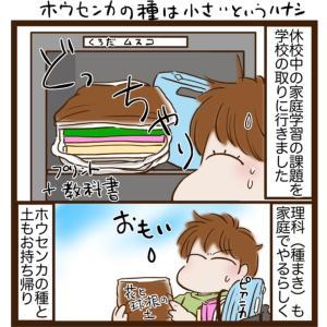 【日常漫画】家庭でのホウセンカの種まきの難しさ!【小さすぎる】