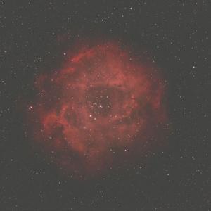 宇宙に咲くバラの花
