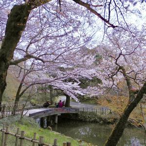 《 春の富山・高岡  高岡古城公園 》