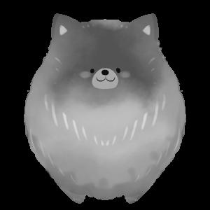 【フリー画像】犬・ポメラニアン(黒)
