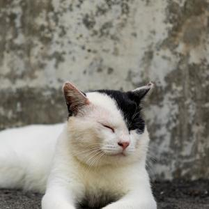 暖かい部屋に猫動画をお届け!!その9!!