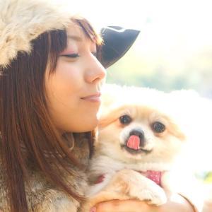 【ワンちゃん】犬の良さって何だろう?小さいころから世話をしてきた僕が魅力を語る。