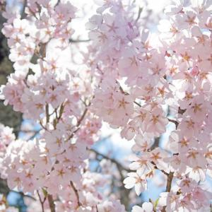春アニメ2020年!!春に見てみたいおすすめアニメは?春の注目作品は?