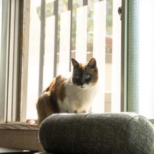 【飼い猫】ネコと住んでいて油断をしてはいけないこと7選。
