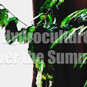 ハイドロカルチャーで育てる観葉植物の夏越し対策3選!特有の問題とその解決方法