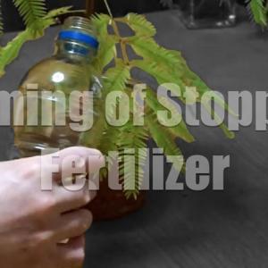冬間近!ハイドロカルチャーの肥料を止めるタイミングはいつ?「肥料断ち」の判断基準