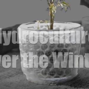 ハイドロカルチャーで育てる観葉植物の冬越し対策3選!特有の問題点と対策