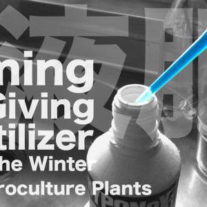 春到来!ハイドロカルチャーで育てる観葉植物に肥料を与え始めるタイミングは?