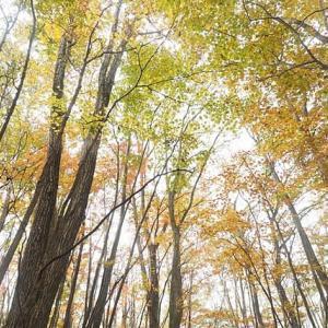 紅葉の三頭山