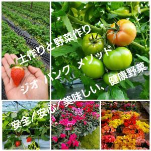 安全/安心/美味しい、健康野菜作り