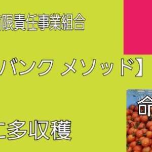 「リズム3」野菜作りや果実栽培用 酵素剤