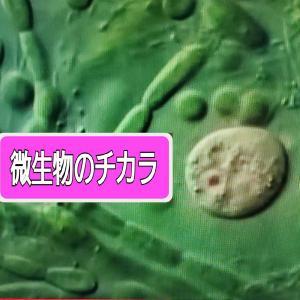 農業用 微生物で「土づくり」