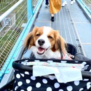 日本一の吊り橋