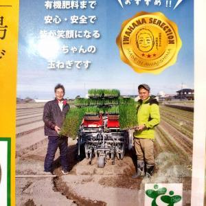 玉ねぎは、田植え機ならぬ「移植機」で植える