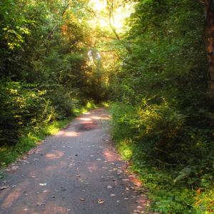 スロージョギングが認知症の予防に有効?体験者が感じた効果をご紹介します