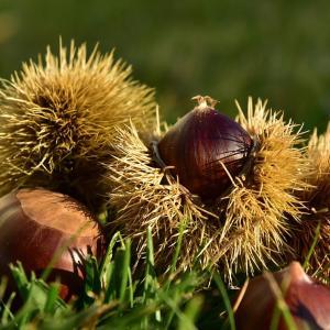 秋はダイエットに最適な季節です/たくさん脂肪を燃やして理想の体へ