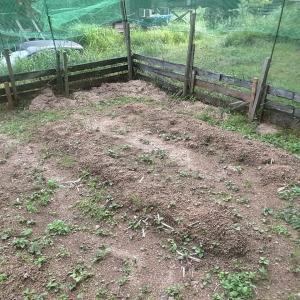 白菜に向けて畑の土づくり
