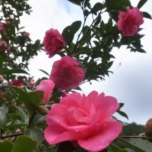東吉野ログ生活184日目・午後から雨で。。。