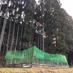 東吉野ログ生活197日目・あけましておめでとうございます