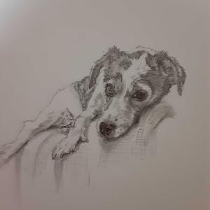 ソファホリホリ犬