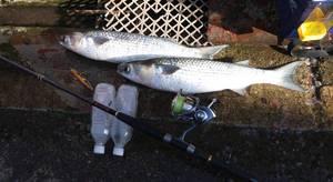 回想:年間釣果報告抜粋(2018) プロアングラー()の釣果