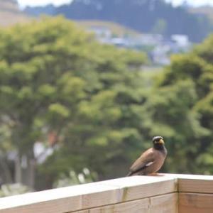 おしゃべりな鳥たち     今度はラズベリーを頂きました!