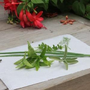 若菜摘み     七草がゆを新春に食べると長生きできるのらしい