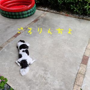 もんちゃんは、普段吠えない犬。