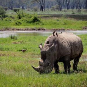 【ケニアサファリ】野性のサイを求めてナクル湖へ日帰り!「BIG5」全制覇!