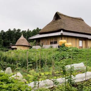 1ヶ月ぶりにコンニチハ!京都・三重の田舎で元気にやっていました!