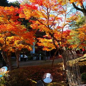 秋の三次で1日のんびり!尾関山公園の紅葉&みよし運動公園の大型遊具