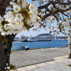 【写真】門司港の桜など