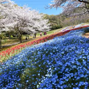 【写真】下関火の山公園の桜などto下関要塞