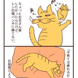 【猫漫画】ある日の玉藻