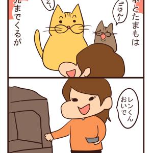 【猫漫画】定位置