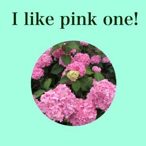 【いち英語】ピンクが好き