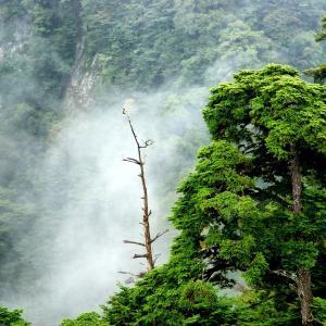 ジブリに出てきそうな霞がかった新緑の森林と霧雨☆