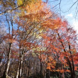 秋の伊豆🍁天城の八丁池トレッキング