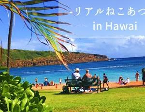 リアルねこあつめin ハワイ ホノルル ハナウマ湾