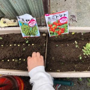 家庭菜園にチャレンジ☆彡とうもろこし・枝豆・きゅうり・ミニトマトの種蒔き