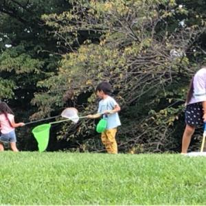 2021・本牧山頂公園で虫捕り…夏の思い出☆彡(トンボ・セミ)