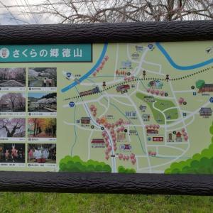 川根徳山の垂れ桜🌸