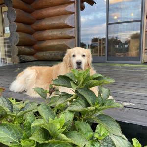 【那須】温かいログハウスのお宿と大きな看板犬