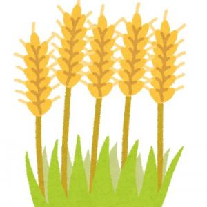 輸入小麦が【ヤバい】理由!