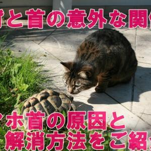 猫背と首の意外な関係!?スマホ首の原因と解消方法をご紹介!!