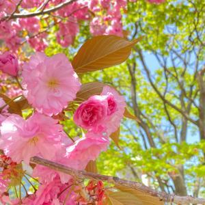【函館に行こう】Flower Blooming town Hakodate