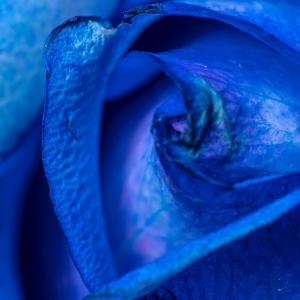 BLUEの花 不可能の象徴改め夢叶う?!